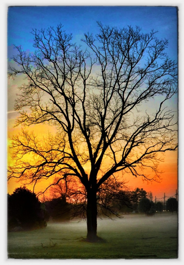 Morning Tree with Dramatic Sky
